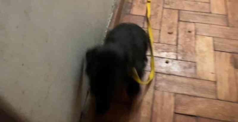 Nove cães são resgatados em apartamento na Tijuca, no Rio