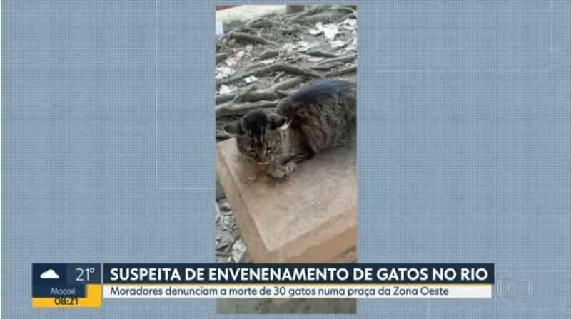 Moradores denunciam que dezenas de gatos encontrados mortos em praça no Rio foram envenenados