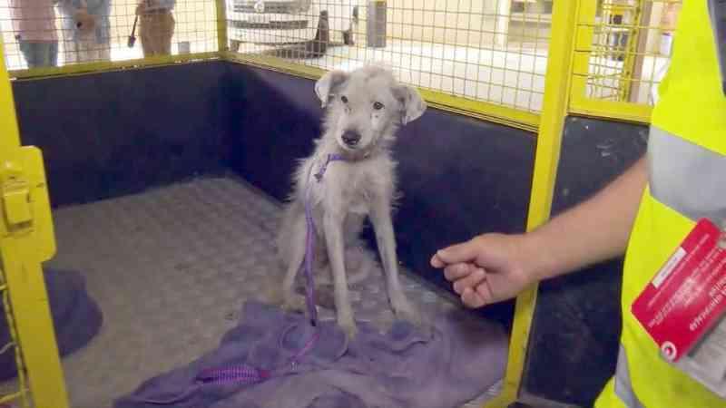 Rio: morre Algodão, cãozinho resgatado na Linha Amarela em junho; outros aguardam uma família