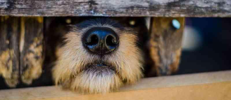 ONG assume sítio com mais de 100 animais no Rio e faz vaquinha virtual para mantê-los