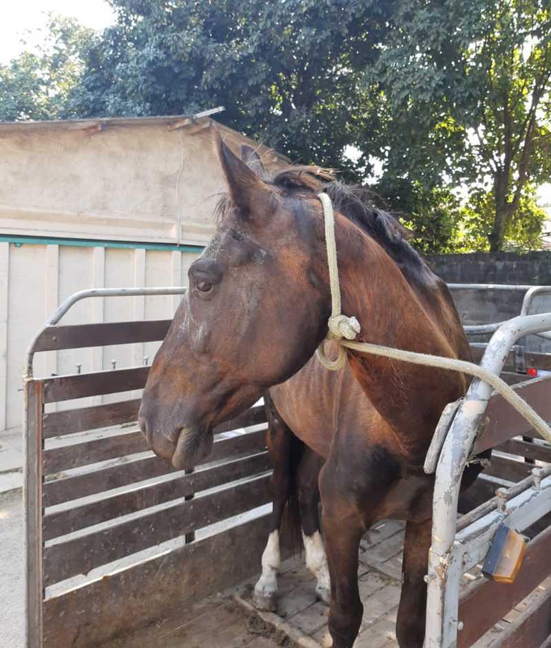 Cavalo que puxava carroça com entulho é resgatado na Freguesia, no Rio
