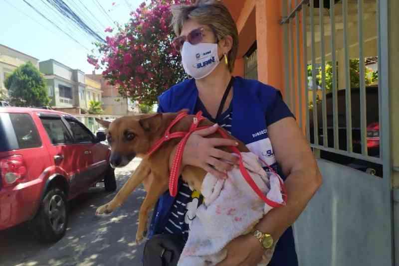 Subsecretaria de Proteção e Bem Estar Animal do RJ resgata cadela que sofria maus-tratos na Baixada Fluminense