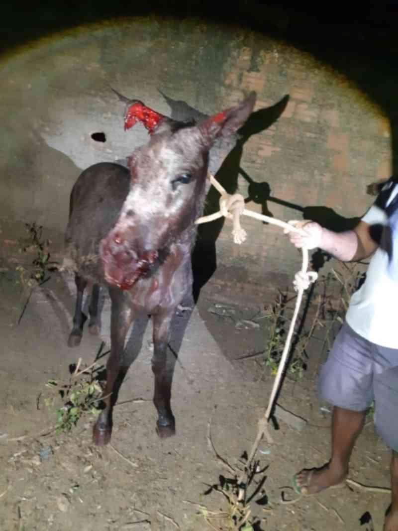 Policiais salvam jegue atacado por cães na zona leste de Porto Velho, RO