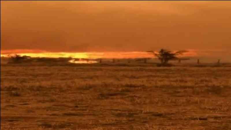 Vídeo mostra bovinos em desespero para escapar de queimada, em Rondônia
