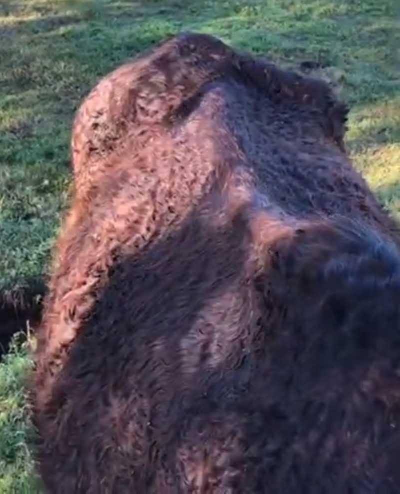 Cavalo apreendido em Cachoeira do Sul (RS) se recupera e será adotado em Santa Maria