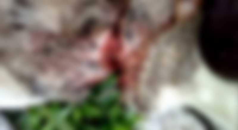 Cachorro tem lesões graves no pescoço por maus-tratos no interior de Canguçu, RS