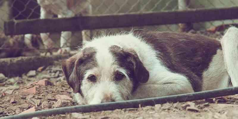 Campanha busca novo lar para quase 700 animais em Caxias do Sul, RS