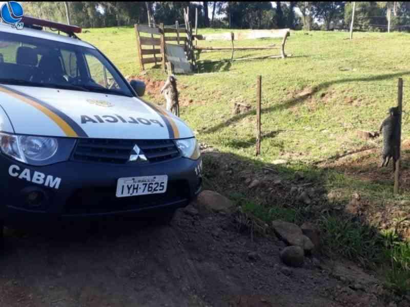 Gatos são mortos e pendurados em cerca; crime é investigado em Ibiraiaras, RS
