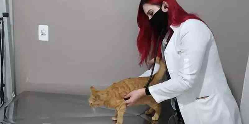 Clínica veterinária para famílias de baixa renda quer ampliar atendimentos em Porto Alegre, RS
