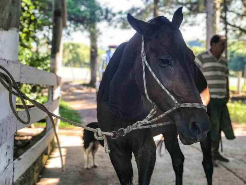 A prefeitura já recolheu neste ano quase 140 cavalos que estavam nas ruas de Porto Alegre, RS