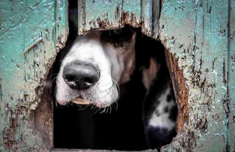 Negado pedido para que cães e gatos figurassem como autores de ação judicial no Rio Grande do Sul