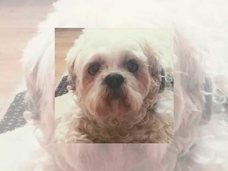 Cachorro ingressa na Justiça do RS pedindo indenização a pet shop por danos físicos e psicológicos