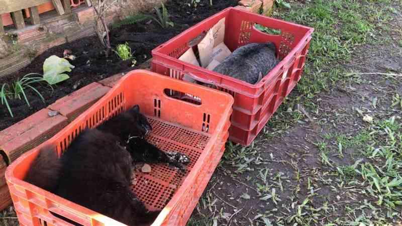 Moradores relatam prática de envenenamento de animais no bairro Vida Nova, Criciúma, SC