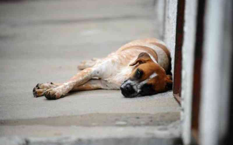 Vereadores de Curitibanos (SC) vão rever medida que proíbe alimentar os animais nas ruas