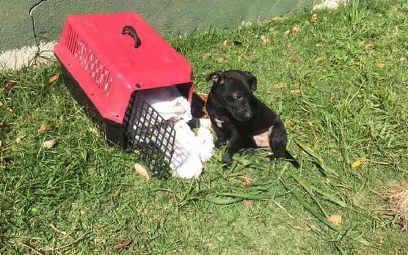 Vídeo mostra momento em que tutores abandonam cachorrinho em terreno em Florianópolis