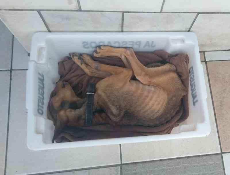 Cão morre por desnutrição em Itajaí, SC
