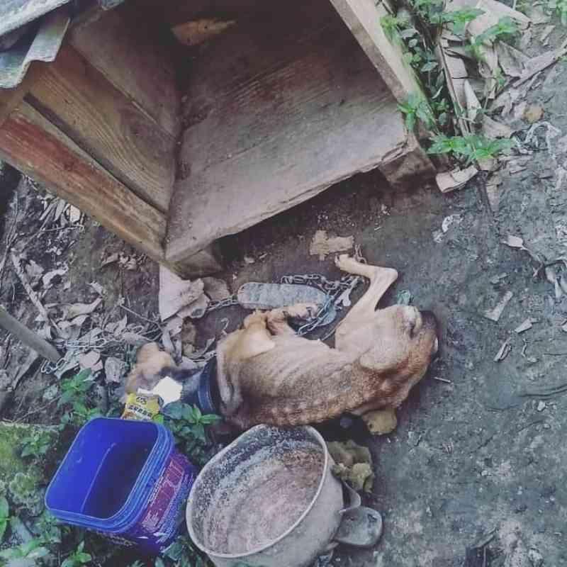 Guarda Ambiental resgata cão com sinais de maus-tratos em Itajaí, SC