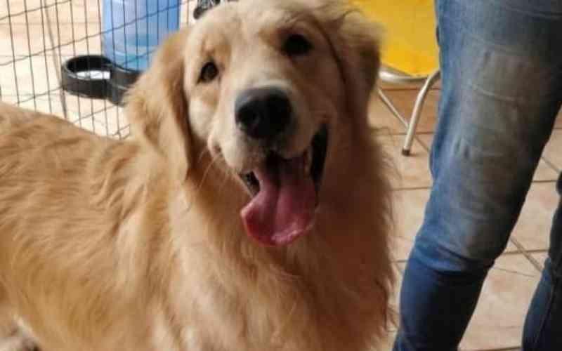 Ridículo e perigoso: vereadores de Penha (SC) aprovam lei que proíbe cachorro de latir