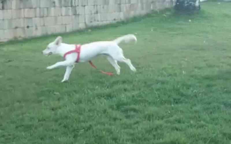 Homem é preso em flagrante após agredir o próprio cachorro em Aracaju, SE