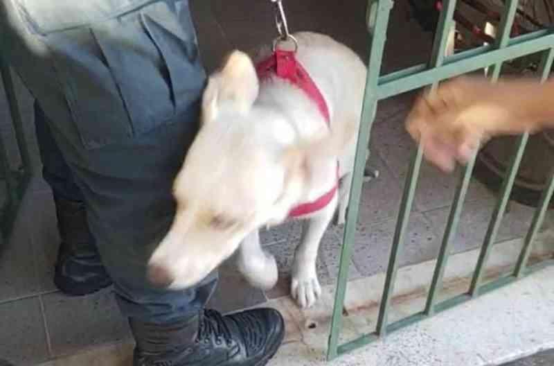 Homem que agrediu cadela em Aracaju vai responder pelo crime de maus-tratos