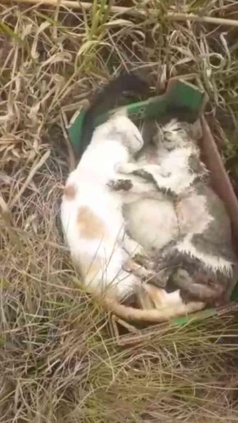 Polícia investiga morte de 34 gatos em Cachoeira Paulista, SP