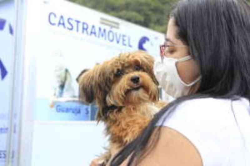 Castramóvel deverá atender 400 animais no primeiro mês de uso em Guarujá, SP