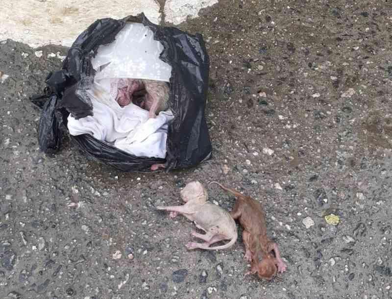 Filhotes de gato são resgatados de saco de lixo em SP: 'Pensei que estavam mortos'