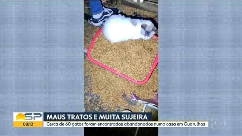 Polícia resgata 60 gatos abandonados de casa em Guarulhos, SP