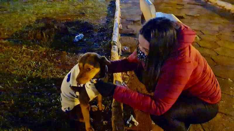 Voluntários de Itapetininga (SP) se unem em ação para proteger animais de rua do frio