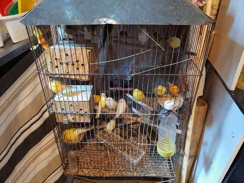 Aves silvestres traficadas são levadas a habitat no Nordeste por ONG de Jundiaí, SP
