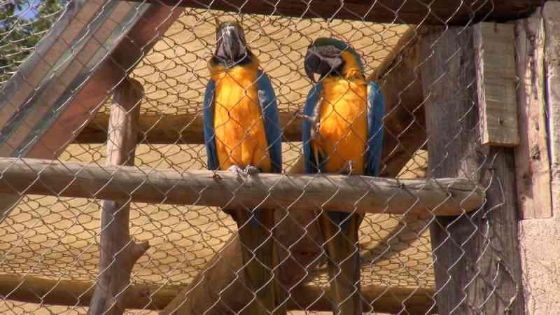 Casal transforma área em refúgio para animais silvestres em Lins, SP