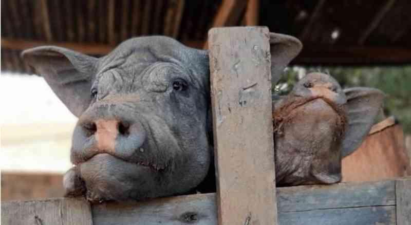 Homem é multado em R$ 60 mil após ser flagrado com animais mortos que serviam de alimento para outros bichos em Lorena, SP