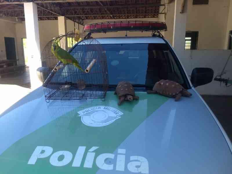 Polícia Ambiental multa homem em R$ 1,5 mil por manter em cativeiro animais da fauna silvestre em Panorama, SP