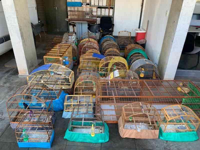 Mais de 30 pássaros são resgatados após denúncia apontar casa de morador suspeito de tráfico de animais