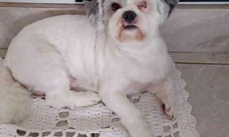 Tutora denuncia maus-tratos após cão ser 'esquecido' em pet shop em SP