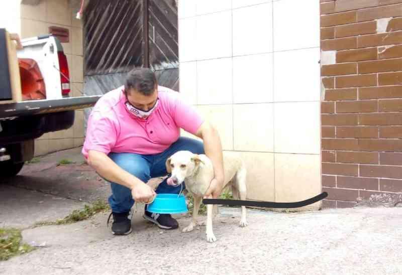 Cão alimentado com ração com mofo e água com larvas é resgatado em SP