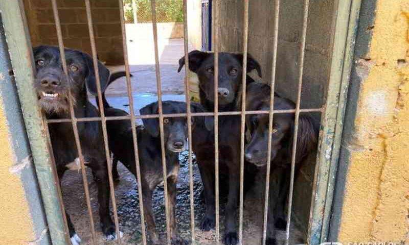 Projeto de lei exige que Prefeitura publique na internet resultado de denúncias de maus-tratos aos animais, em São Carlos, SP