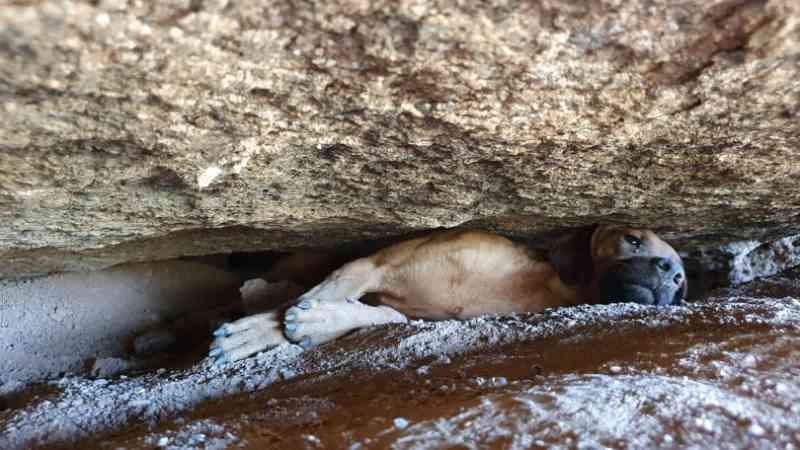 Bombeiros de Valinhos (SP) resgatam cachorro preso entre pedras