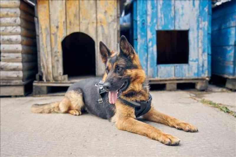 Órgão Especial julga inconstitucional lei que proibia locação de cães de guarda em Valinhos, SP