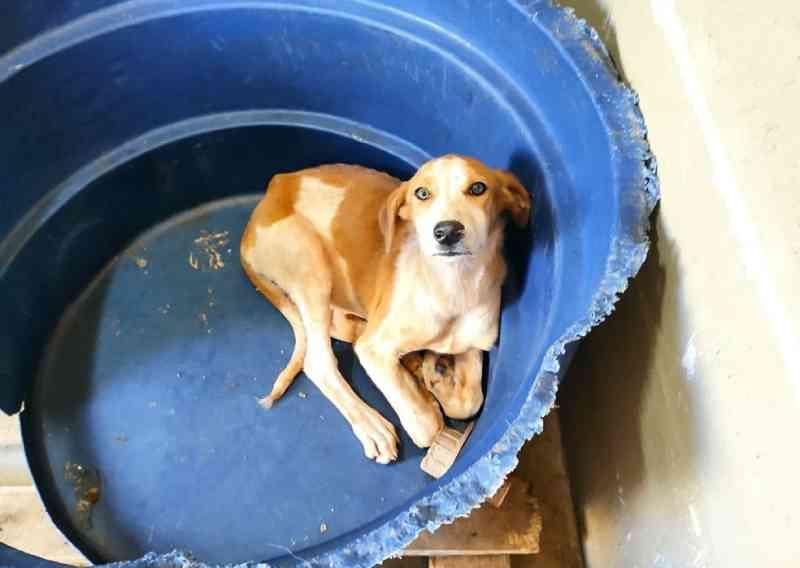 Polícia resgata cães em situação de maus-tratos e trancados em caixas no interior de SP