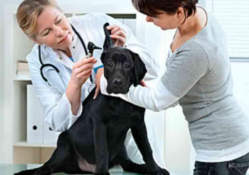 Tribunal de Justiça de São Paulo valida lei que obriga pet shops e veterinários a informar indícios de maus-tratos