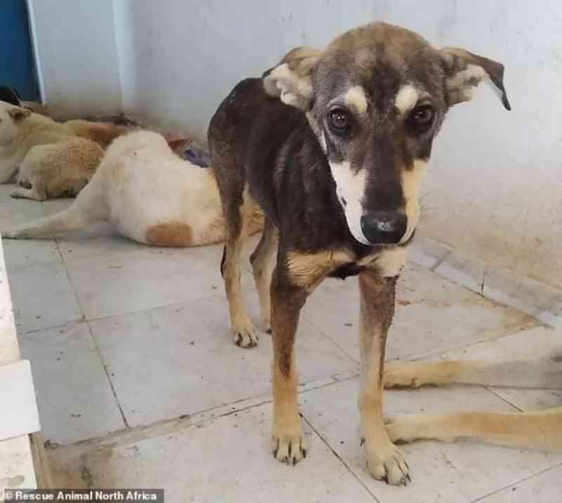 Três homens mataram 22 cães e deixaram 40 feridos, depois de os torturarem com lixívia e pregos