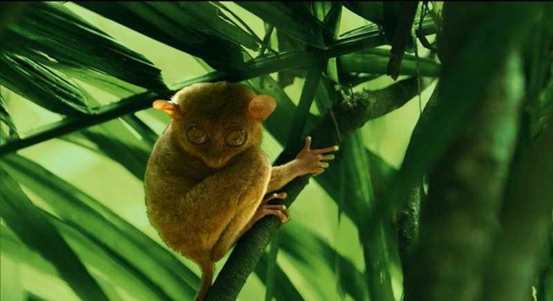 Romeu Piccoli viajou às Filipinas, onde conheceu espécies curiosas como o Társio Reprodução/Record TV
