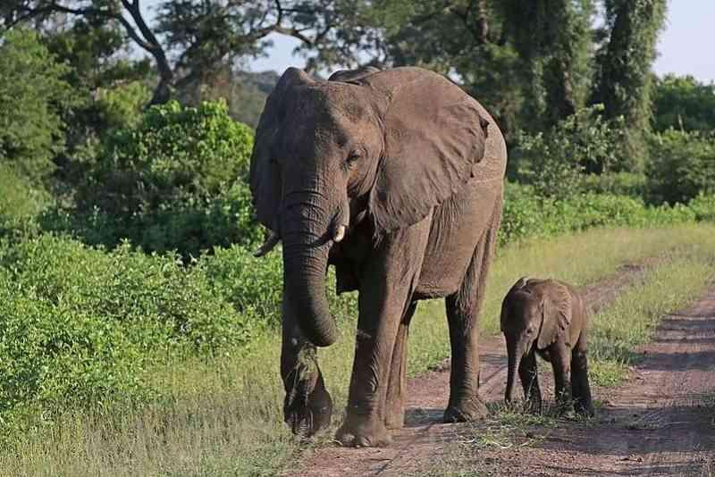 Zoológico usa cannabis para reduzir stress de elefantes