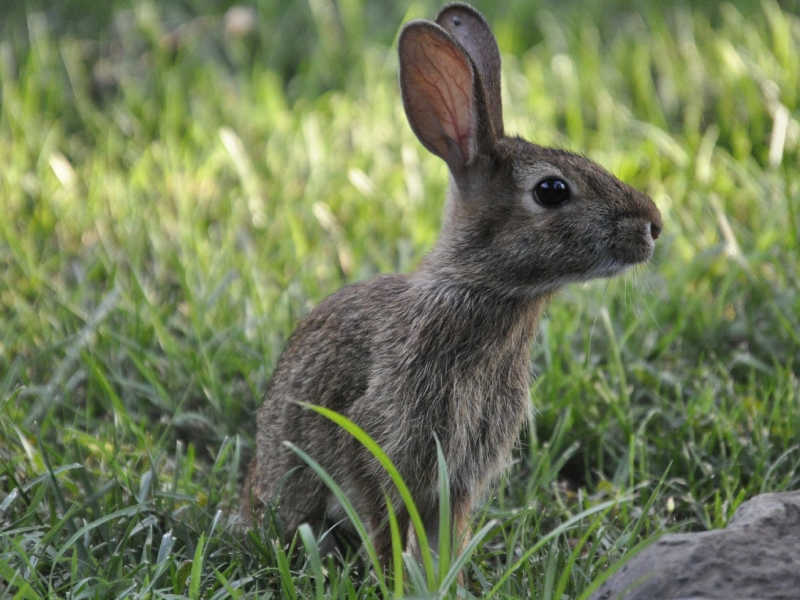 Parceria: ONG Ética Animal terá textos publicados no site Olhar Animal