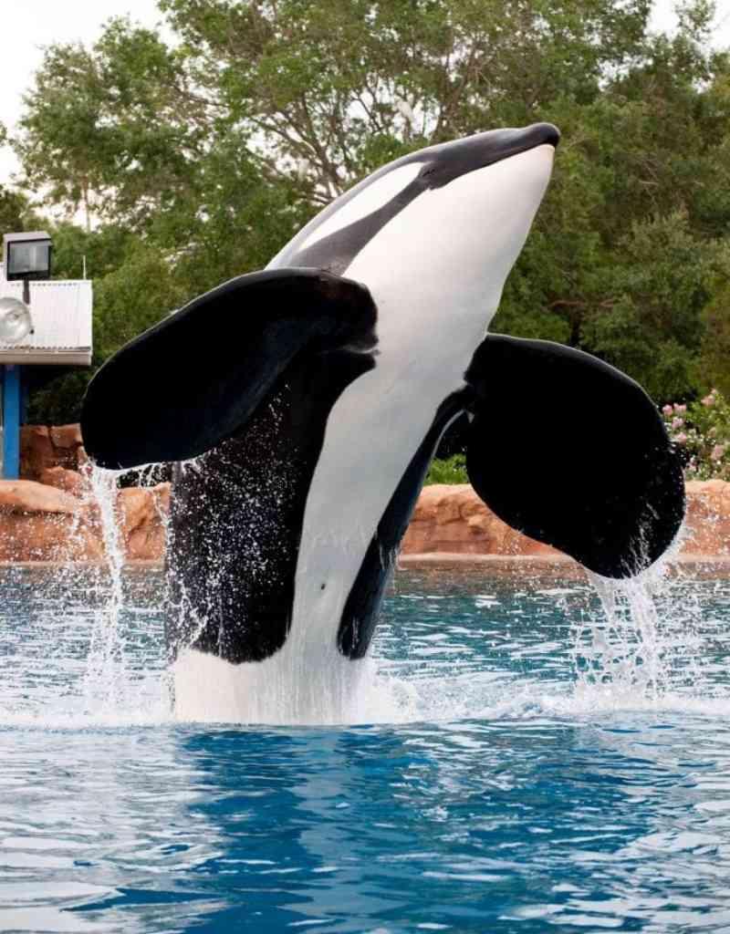 Cientistas em carta aberta pedem o fim do turismo com golfinhos e baleias