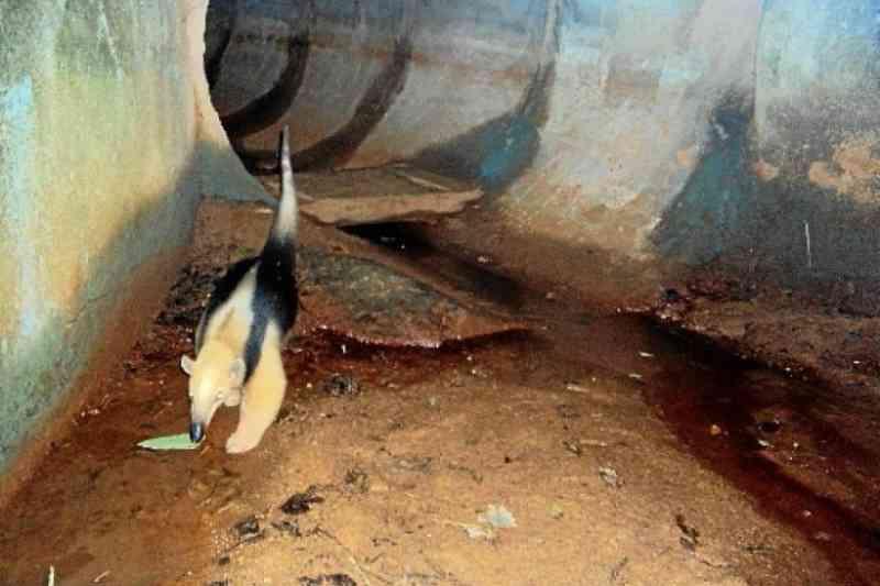 Corredores ecológicos: medidas reduzem acidentes com animais em quase 40%
