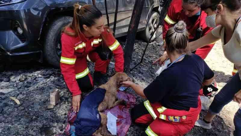 Detido suspeito de atear fogo que vitimou dezenas de animais em canil de Santo Tirso, Portugal