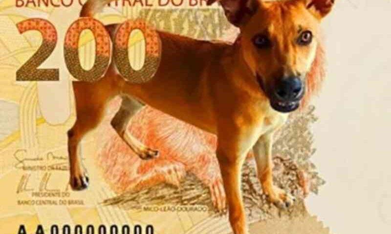 Após repercussão do vira-lata caramelo, Banco Central deve fazer campanha de adoção animal