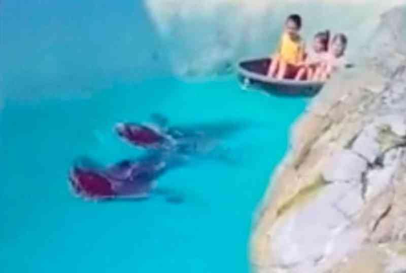 Focas são obrigadas a rebocar barcos com crianças em parque; vídeo